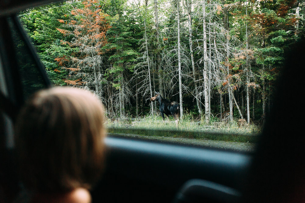 maine-family-camping-photography-5.jpg