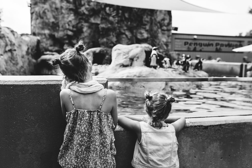 maine-family-photographer-mystic-ct-aquarium-5.jpg