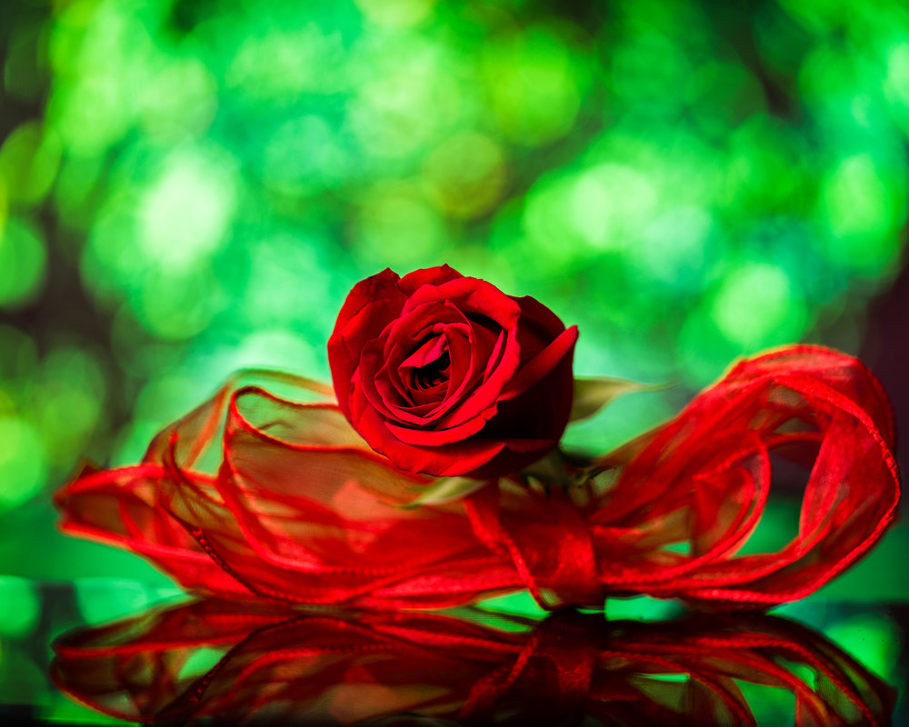 Holiday_Photography_Flower_A_Country_Rose