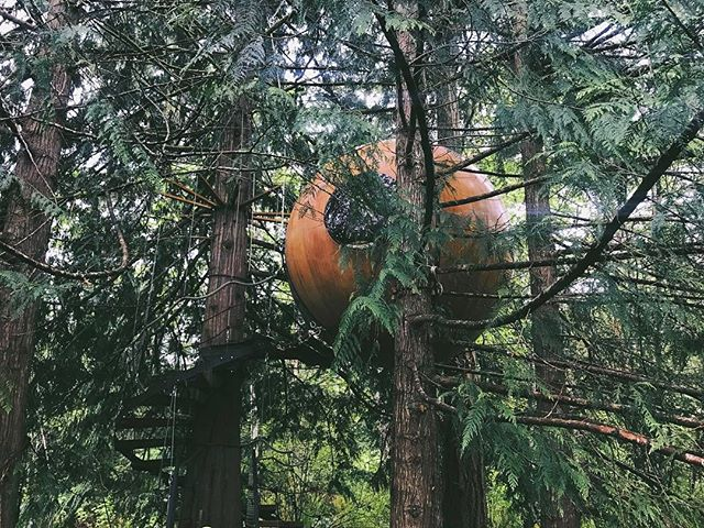 In case you've been trying to reach me, I've been in the trees in this magical spherical treehouse (🙀🌲⚪️🌲)... Don't you worry though, I took the first flight out and went straight to work cuz it's Mother's Day weekend and I'm ready to make some beautiful things after a very inspiring adventure on Vancouver Island!