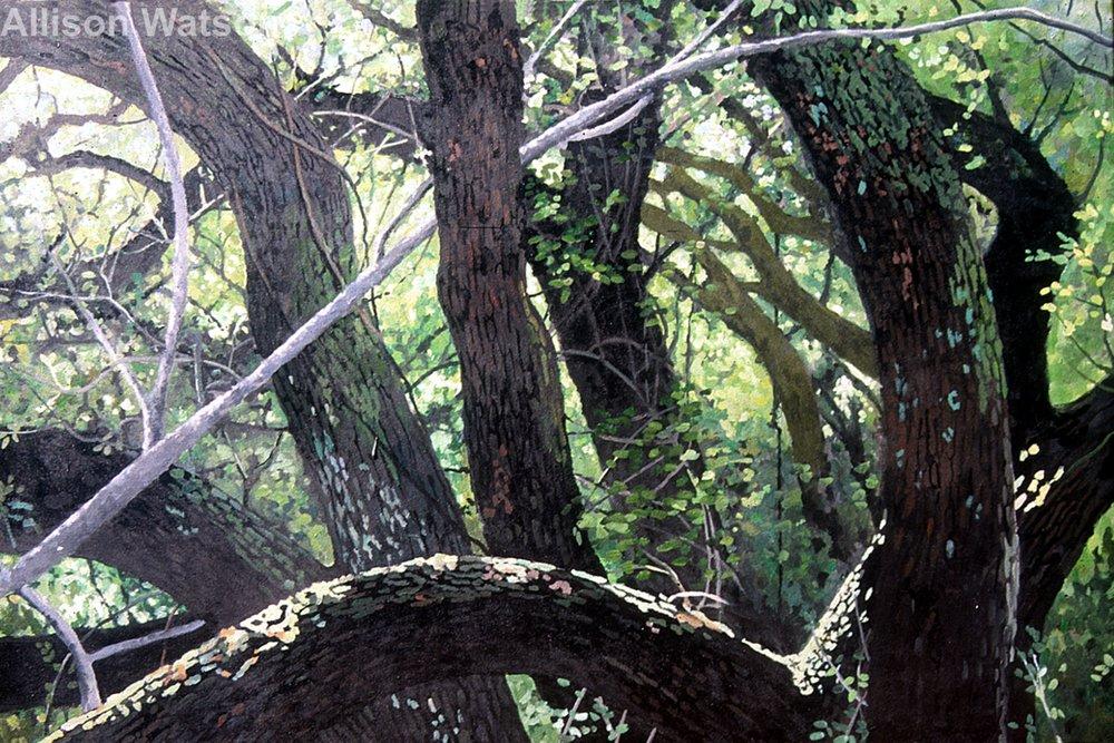 Mystery Oak #5