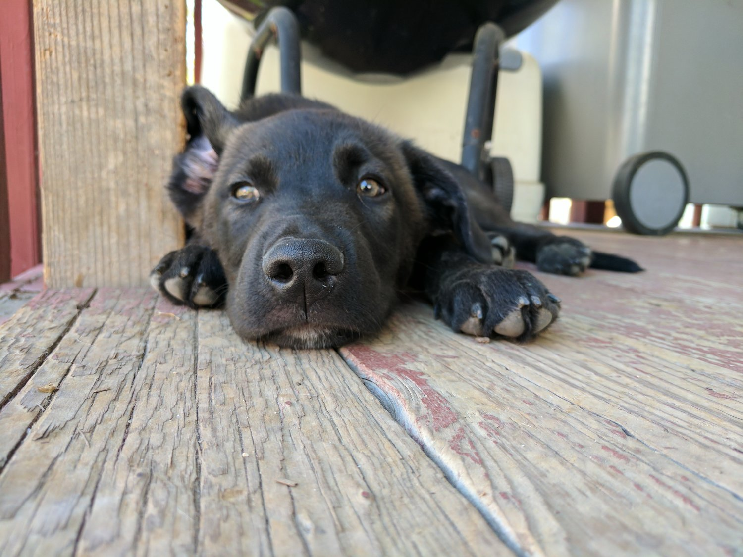 Foster The Good Dog Rescue