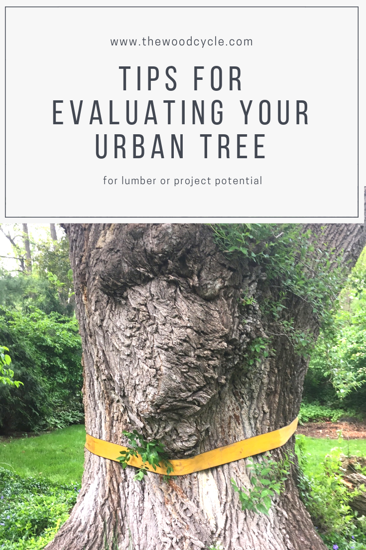 evaluating your tree for urban lumber or project potential