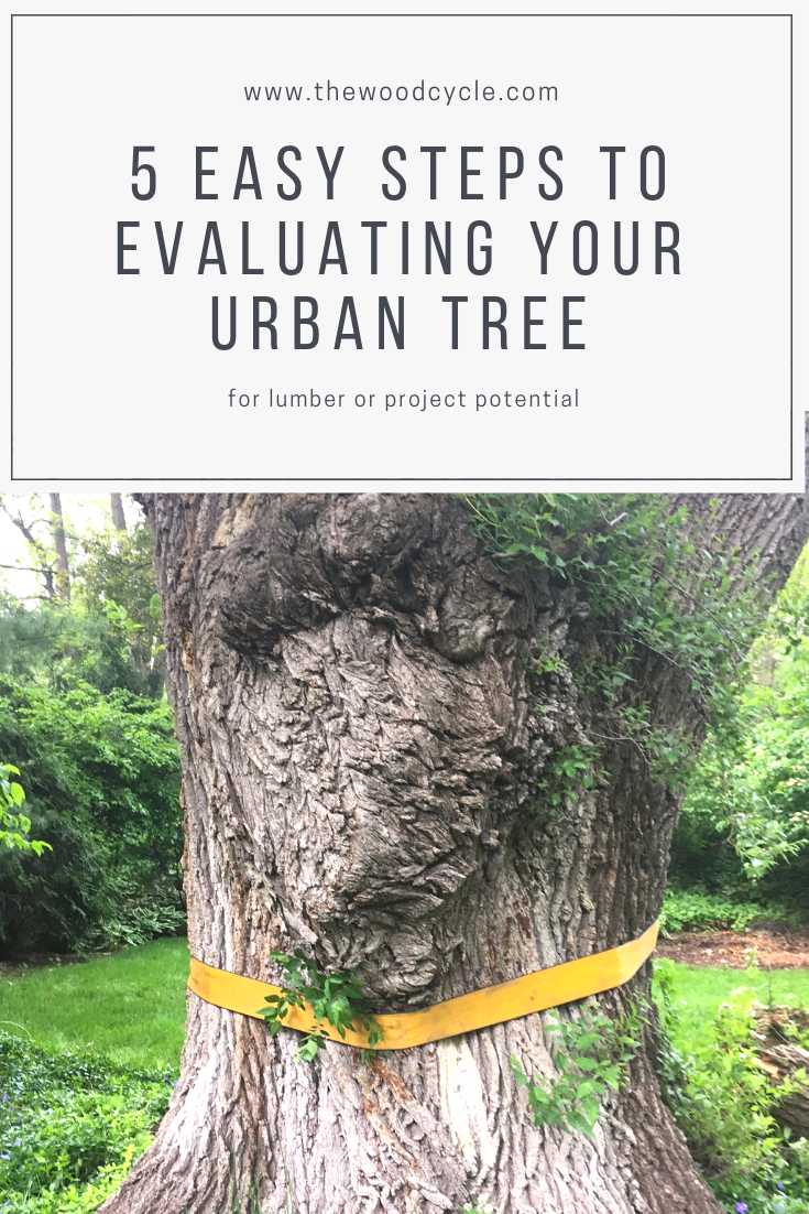 five steps to evaluating your tree for urban lumber or project potential