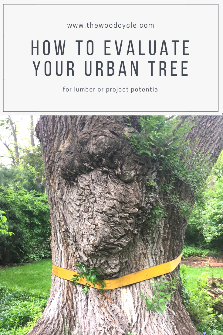 how to evaluate your urban tree or log for lumber and slab potential