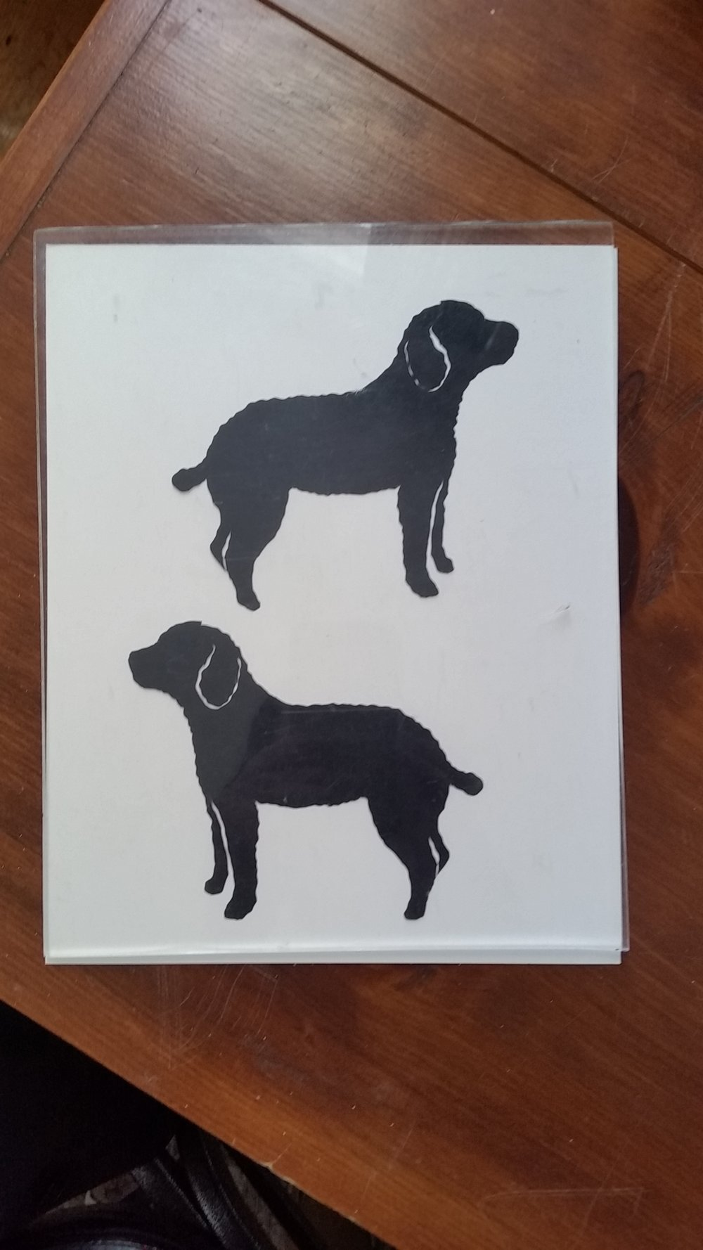 Dog poodle.jpg