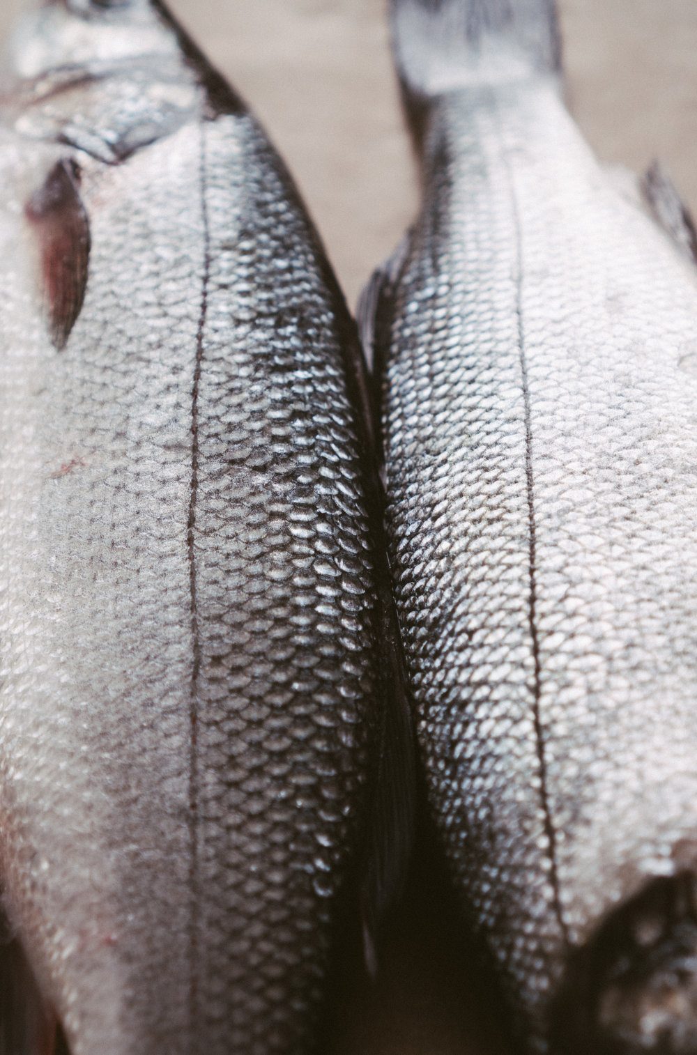 easy_oven_roasted_sea_bass-4.jpg
