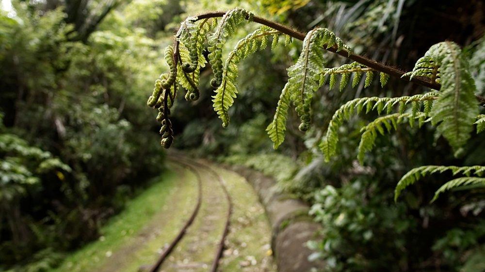 nature-3335670_1920.jpg