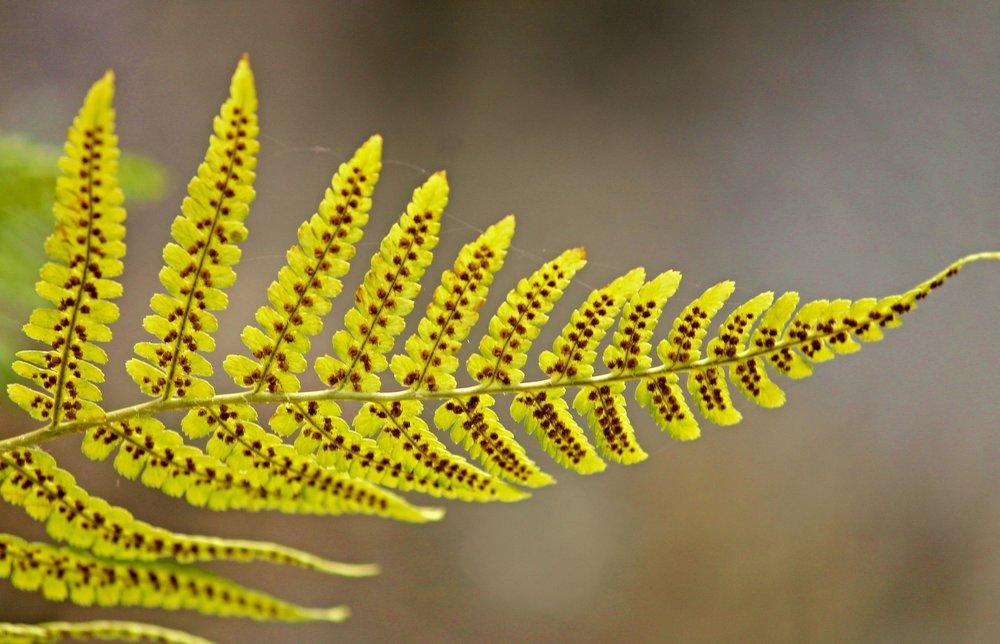 fern-leaf-2680739_1920.jpg