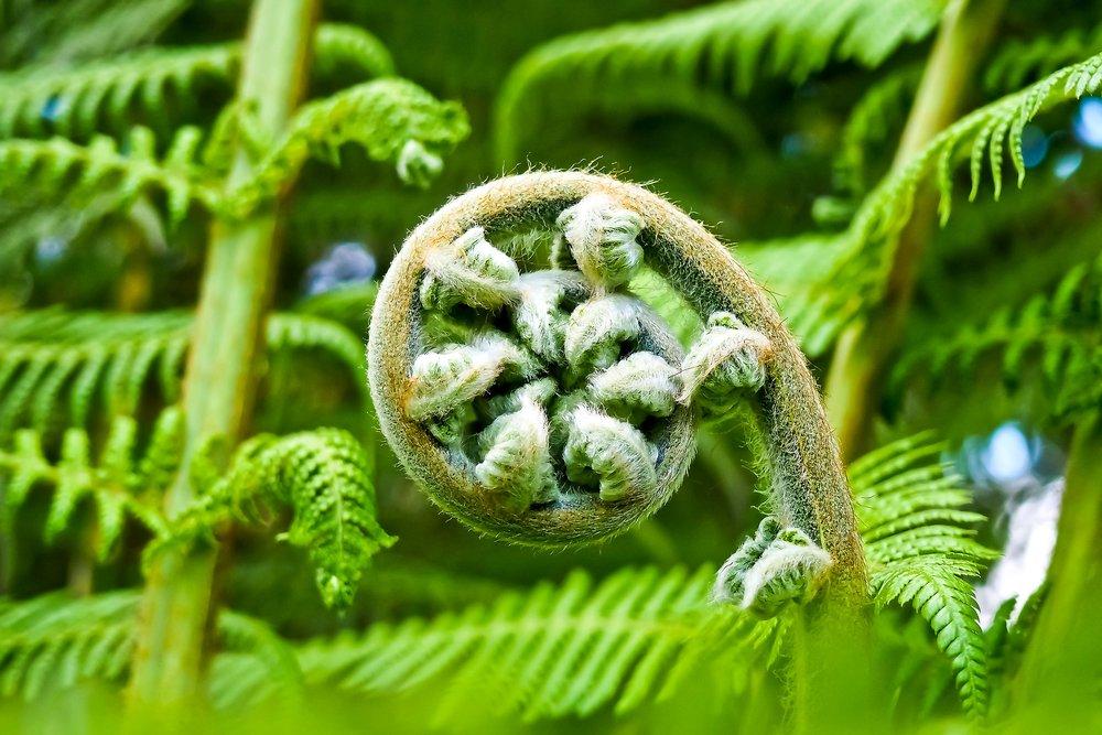palm-fern-2245814_1920.jpg