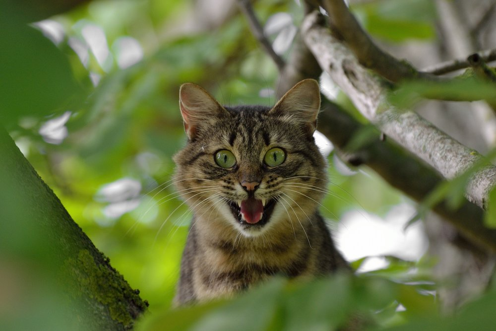 cat-1641959_1920.jpg