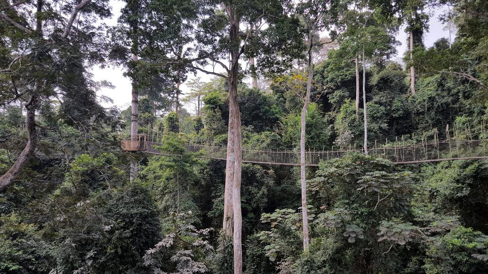 Canopy walkway at Kakum National Park, January 2018 (Dan Casey photo)