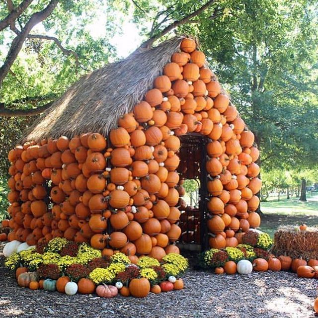 Oh, @cheekwood, we ❤️ you!! #falliscoming #september #cheekwood #repost #nashville • . . . . . #nashvilletn #visitnashville #nashvilletennessee  #nashvillesites #lovenashville #nashvillestyle #tennessee #country #countryliving #pumpkin #pumpkinspice #pumpkinpatch #pumpkins #countryliving #fifthandb #fifthandbroadway