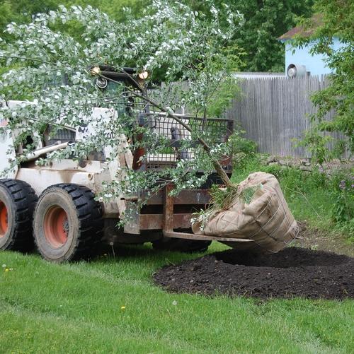 bristol-tree-plant1.jpg