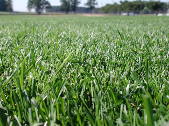 LargePhoto-030lush-grass.jpg