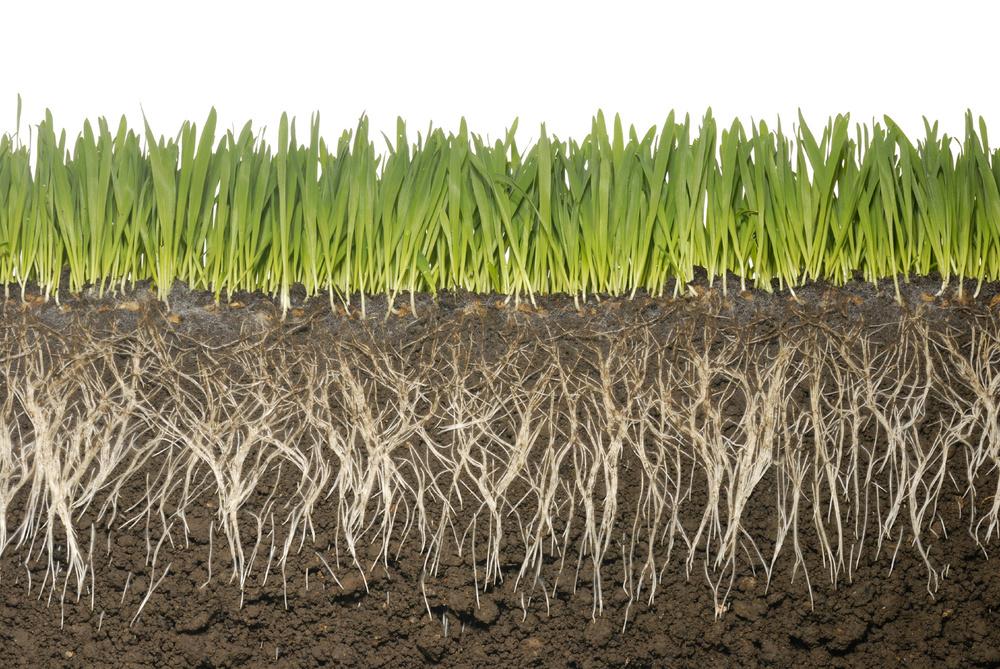 grass-roots.jpg