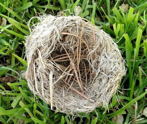 Nest #1.jpg