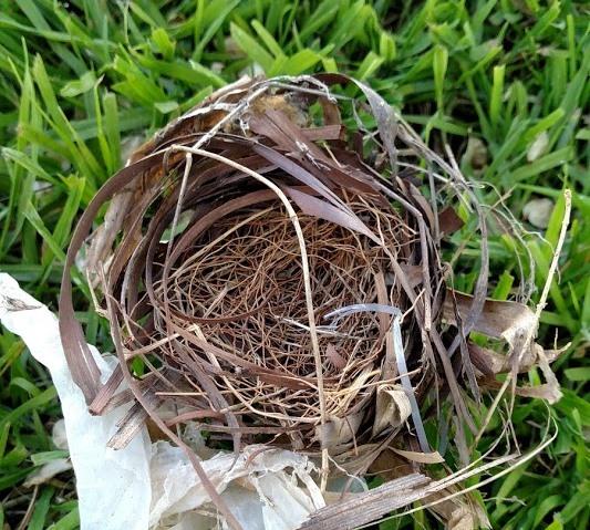 Nest #3.jpg