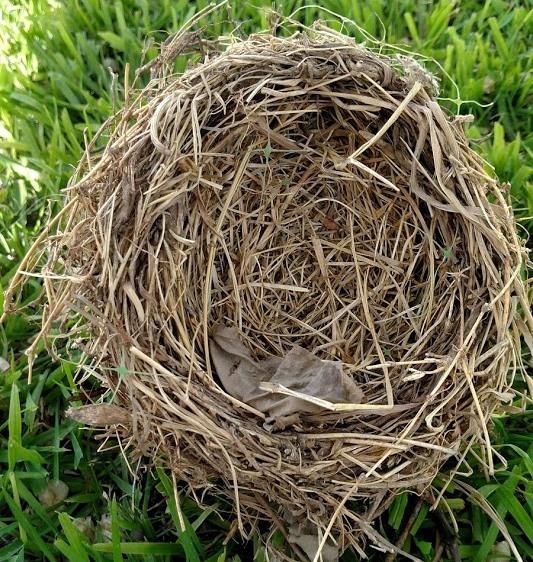 Nest #7.jpg