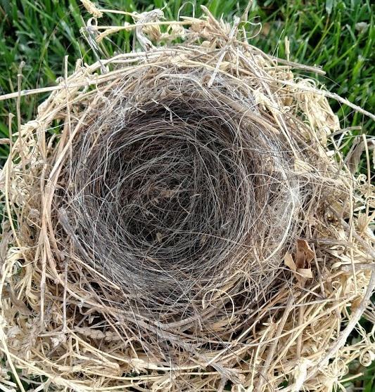 Nest #13.jpg