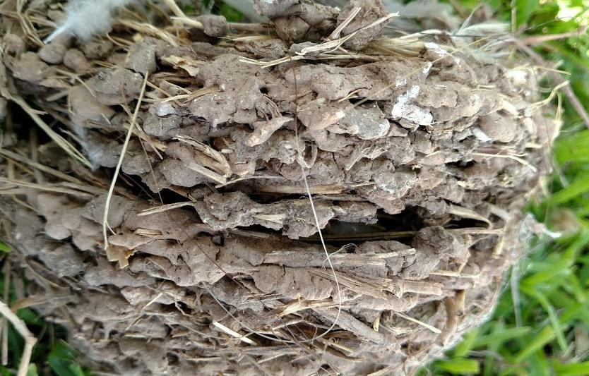 Nest #10.jpg
