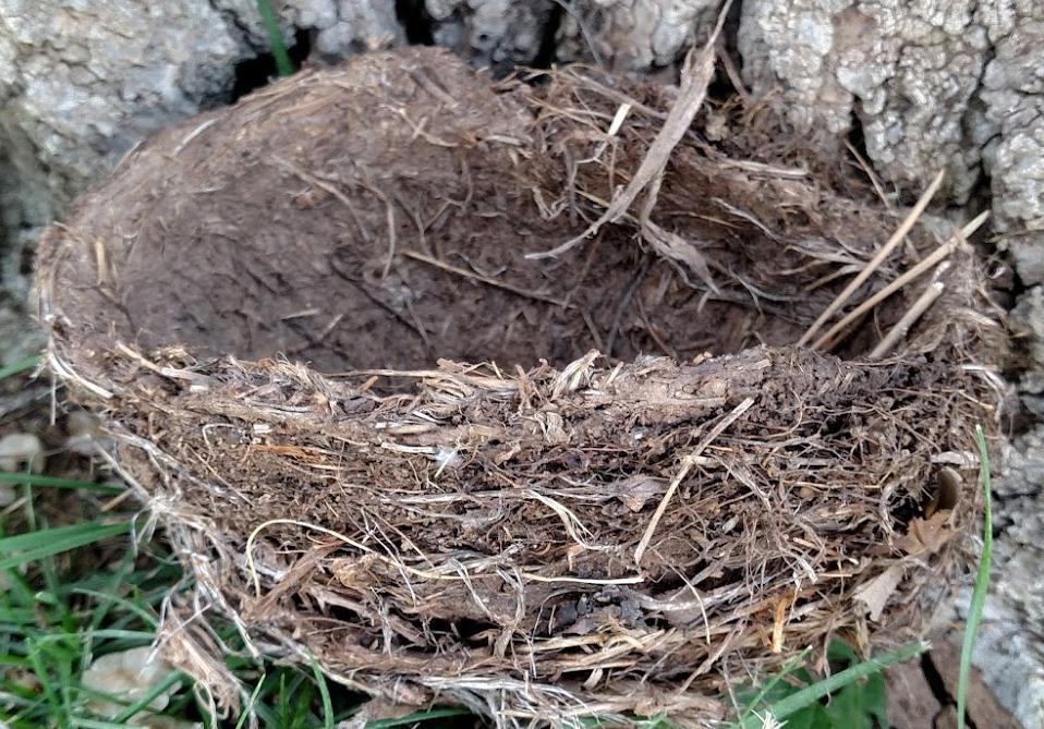 Nest #14.jpg