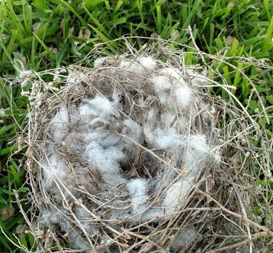 Nest #4.jpg