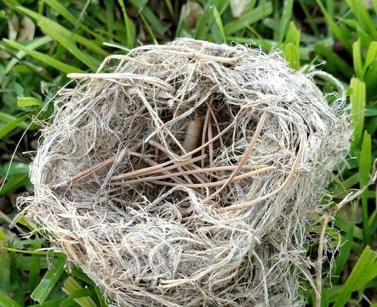 Nest #2.jpg