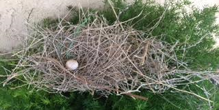Tumble Weed Nest #1.png