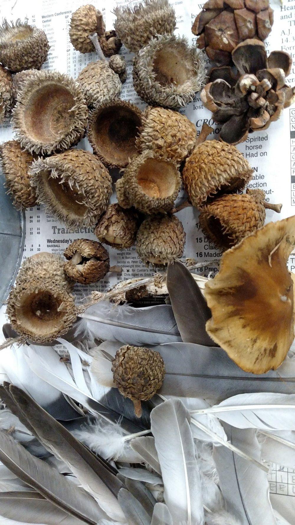 Acorns, Feathers and Mushroom.jpg