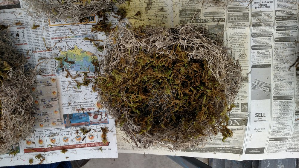 Moss with Hollow to form Nest.jpg