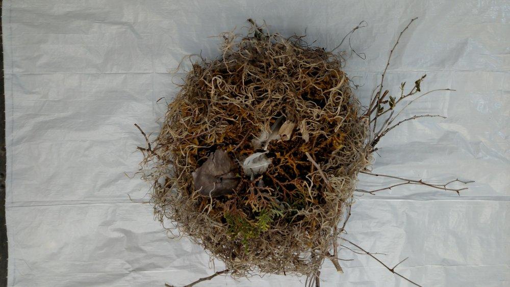 Finished Nest #4.jpg