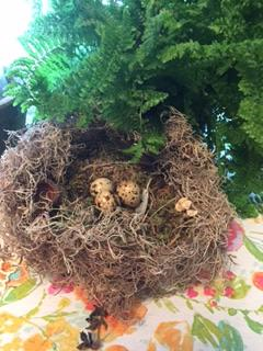 Nest with Fern.png