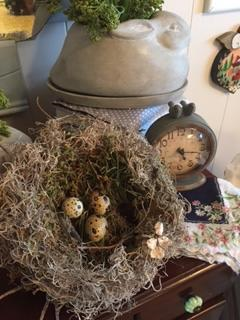 Nest with Quail Eggs #2.png