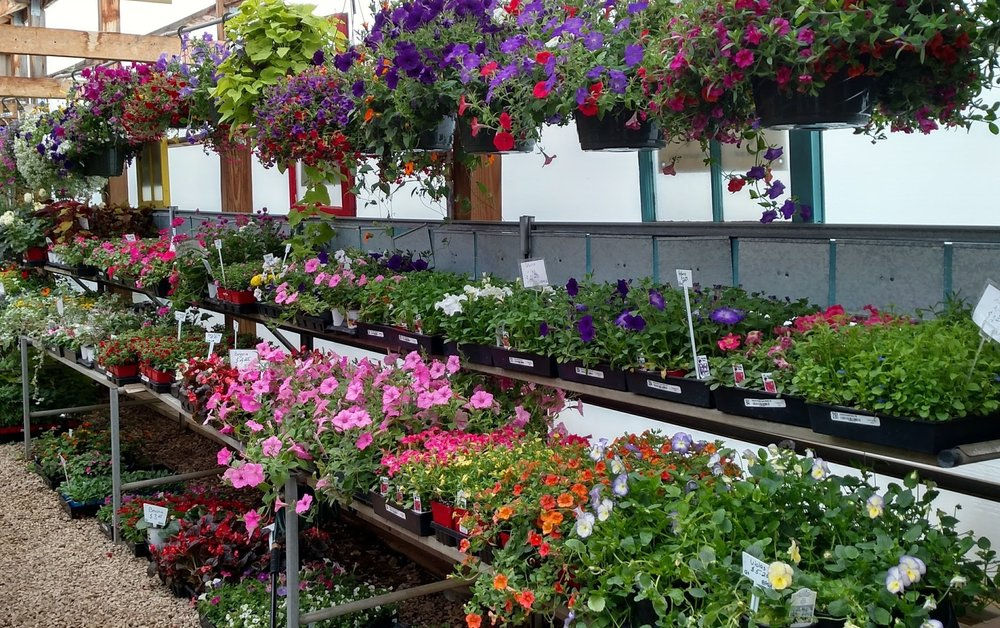 ANNUALS AND HANGING BASKETS.jpg