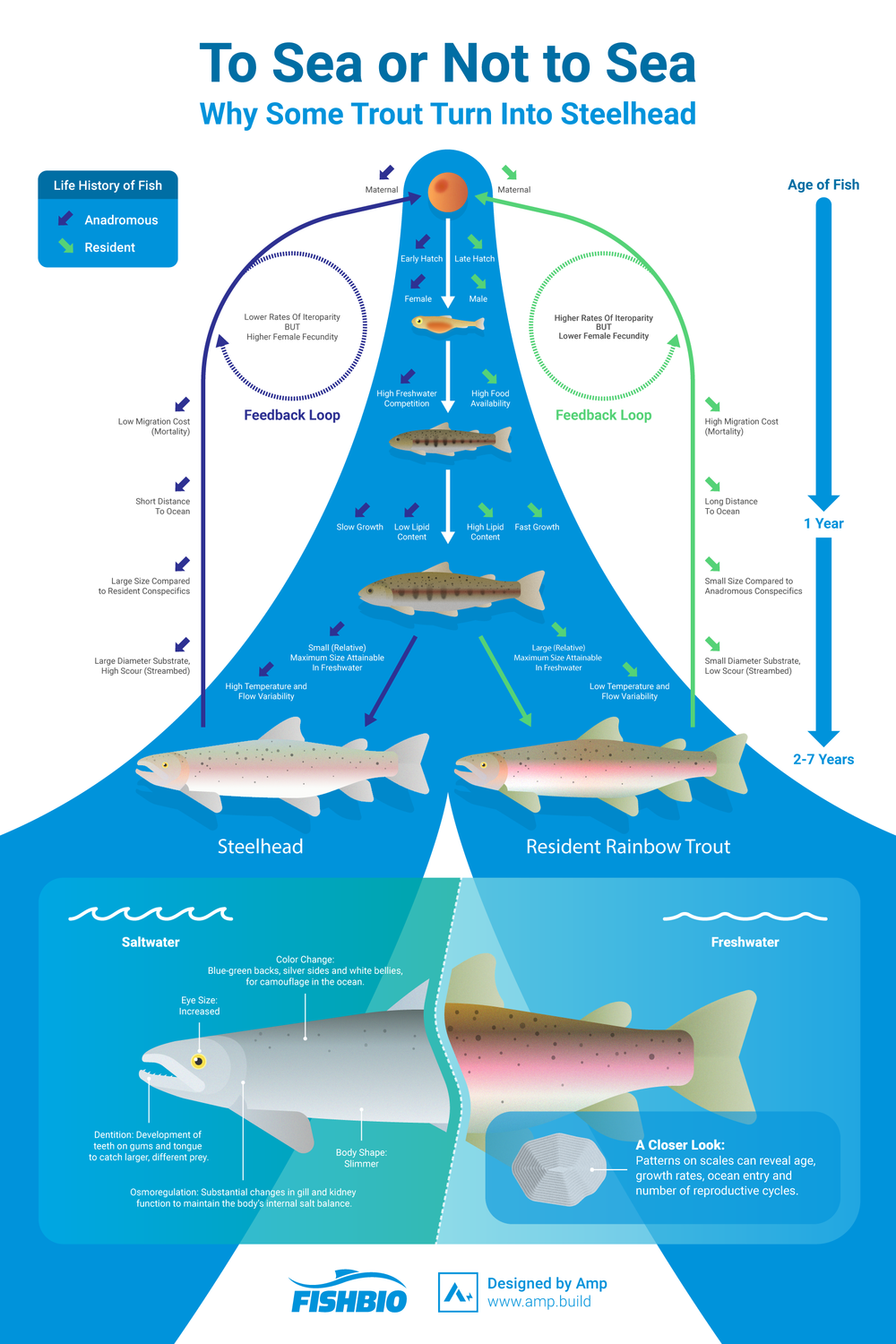 trout-steelhead-diagram.png