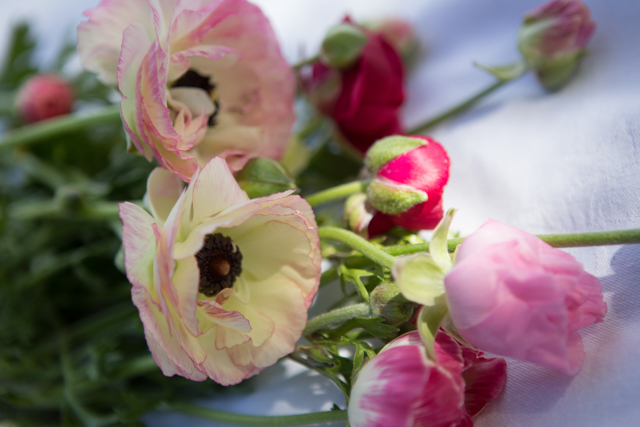Spring flowers plantpassion seasonal scented sustainable cut spring flowers ranunculusg mightylinksfo