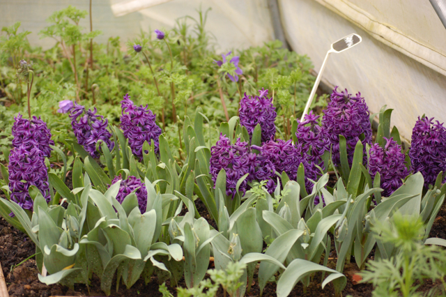 Cropping This Month March Plantpassion Seasonal Scented