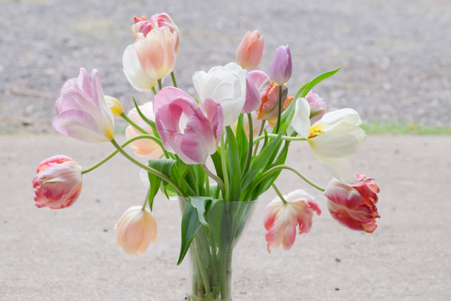 Vase of tulips doing their wonderful drooping thing