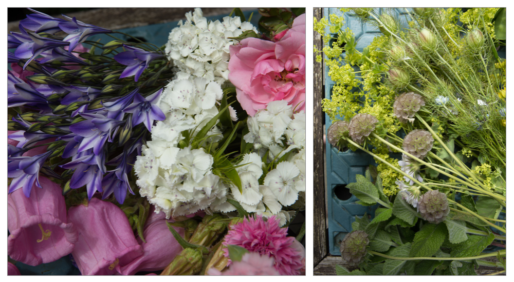 The flowers of Dianthus, Campanulas, Bonica Rose, Cornflowers and Tritellia are shown off against a backdrop of Alchemilla, Bulplurum, Nigella, Honesty and Scabious seed heads and mint.