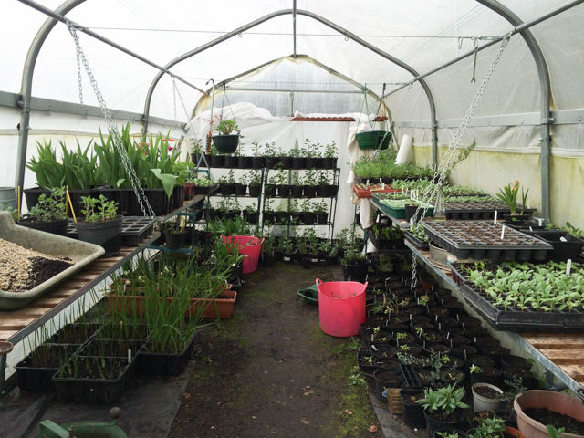 Gro tunnel full of plants this Spring