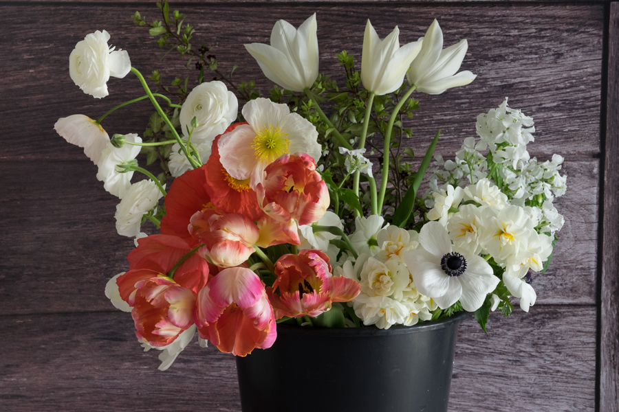 April bucket with blousy Apricot parrot tulips
