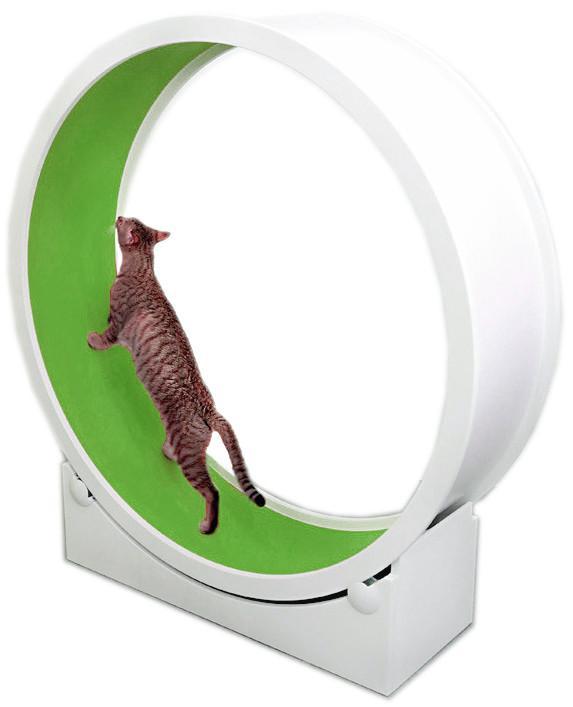 catwheel.jpg