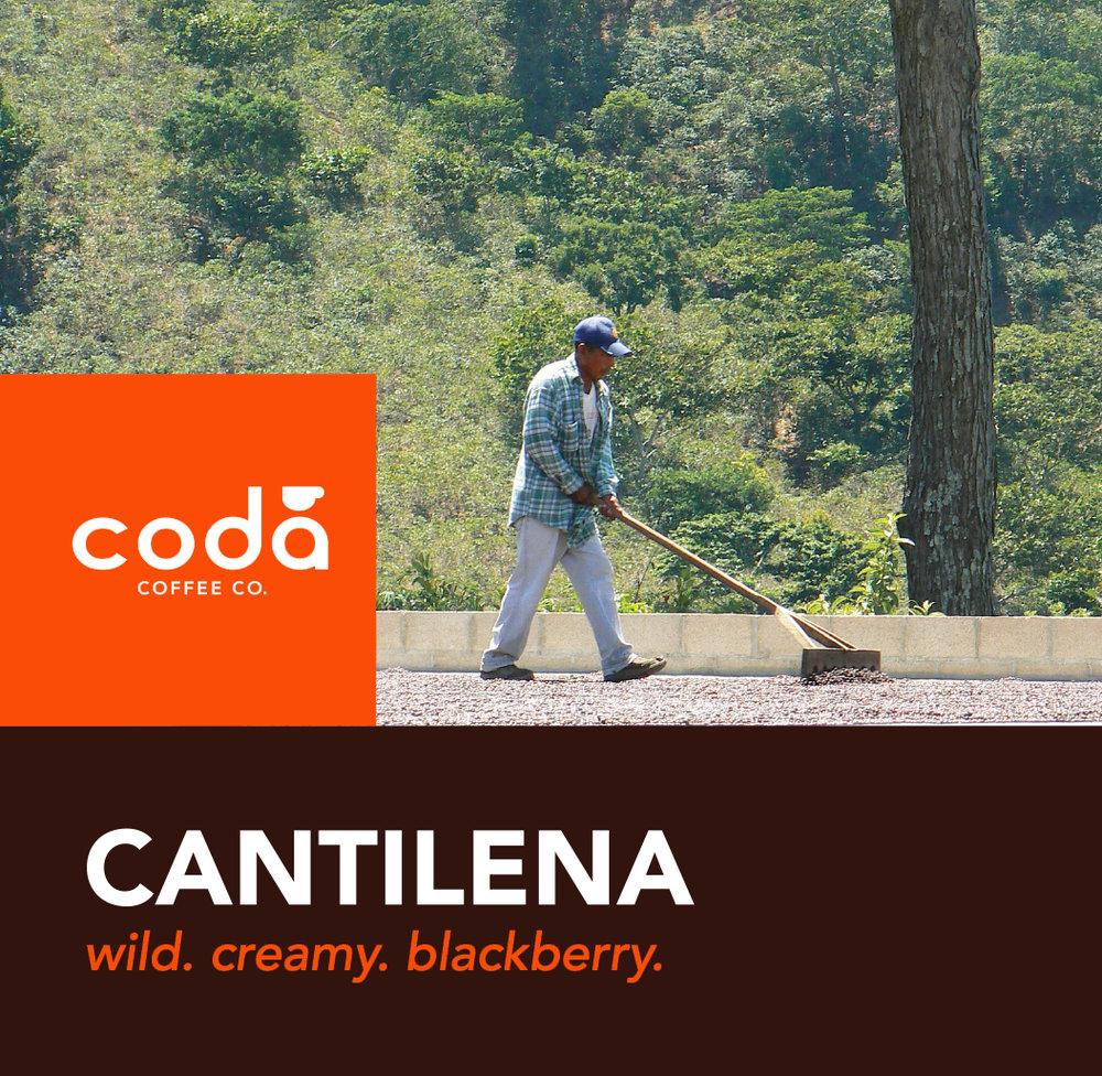Coda Coffee Company Cantilena Coffee Blend