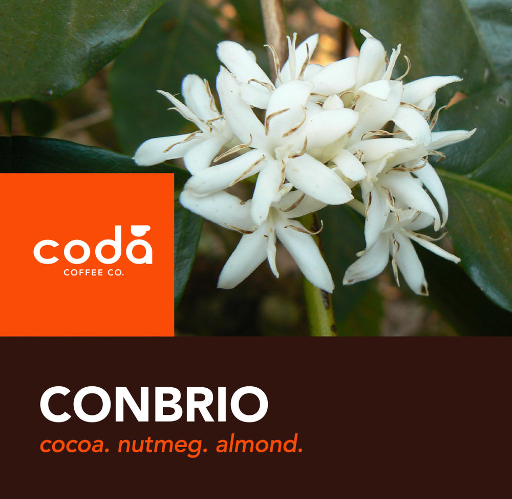 Coda Coffee Company Conbrio Coffee Blend