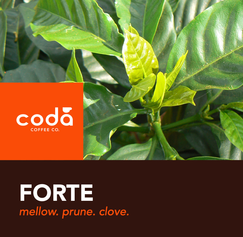 Coda Coffee Company Forte Coffee Blend