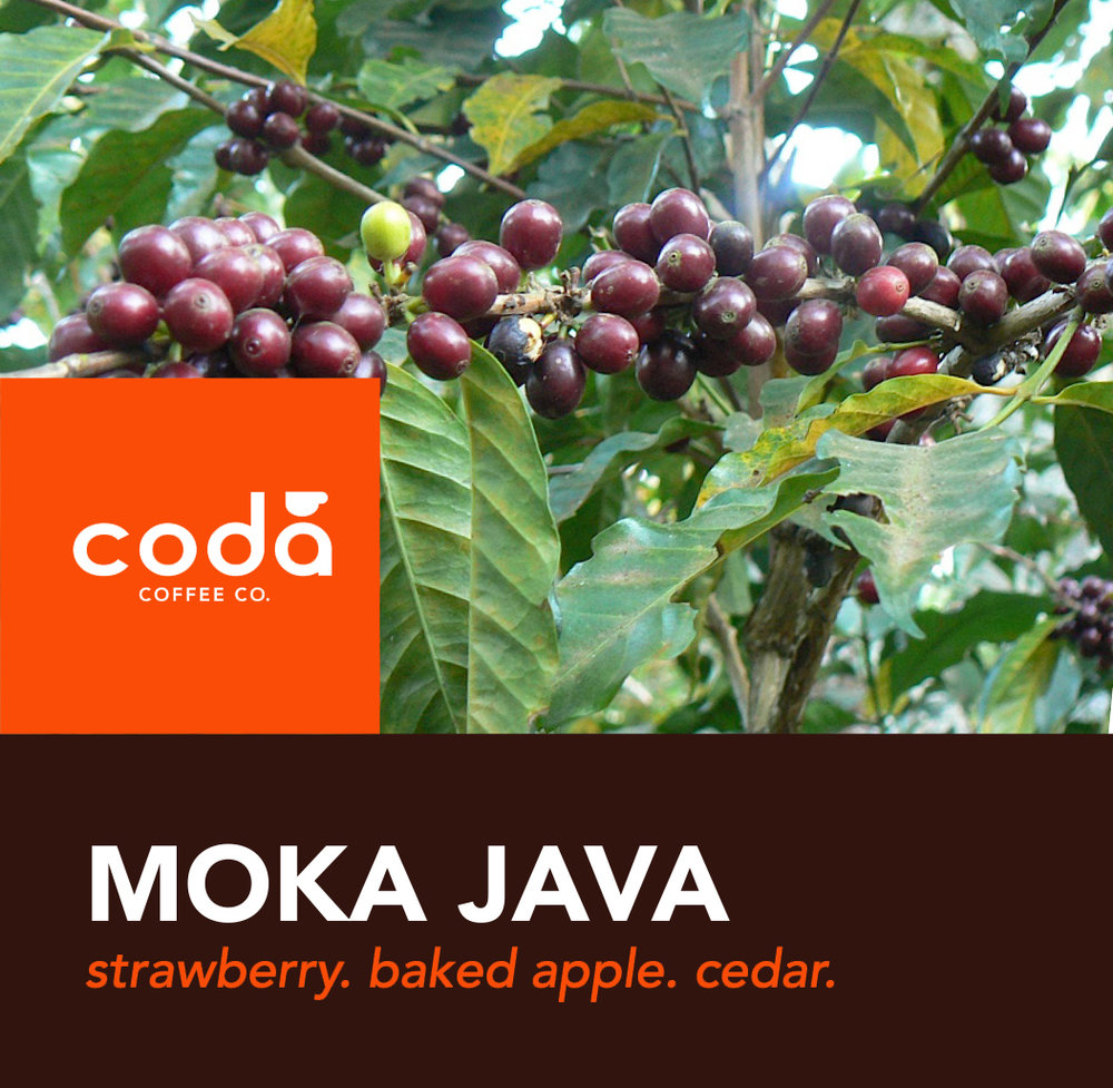 Coda Coffee Company Moka Java Coffee Blend