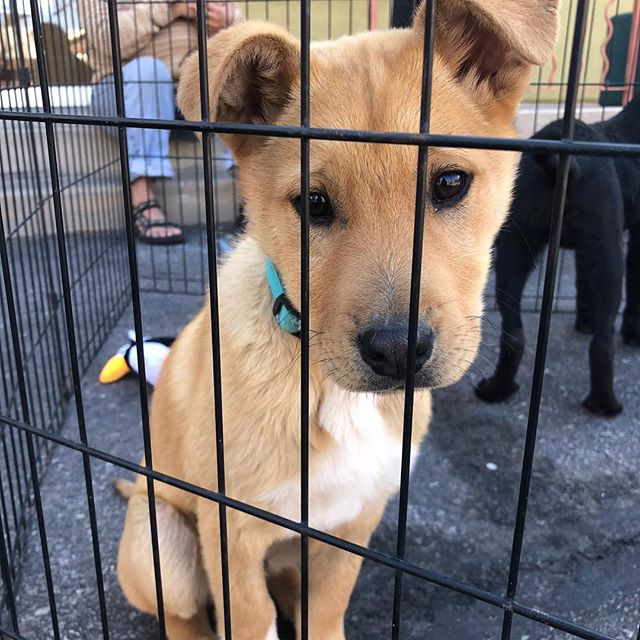 ADOPTION DAY at WabiSabi! @underdogrescuemoab is here with 5 beautiful PUPPIES from 10 AM to 1 PM! Come thrift and pet! #puppies #rescuedog #adopt