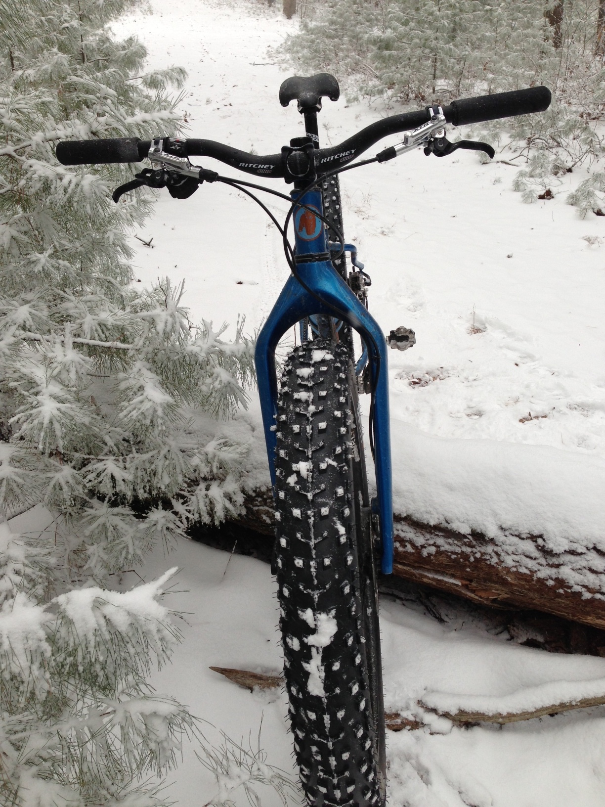 honey-fat-bike
