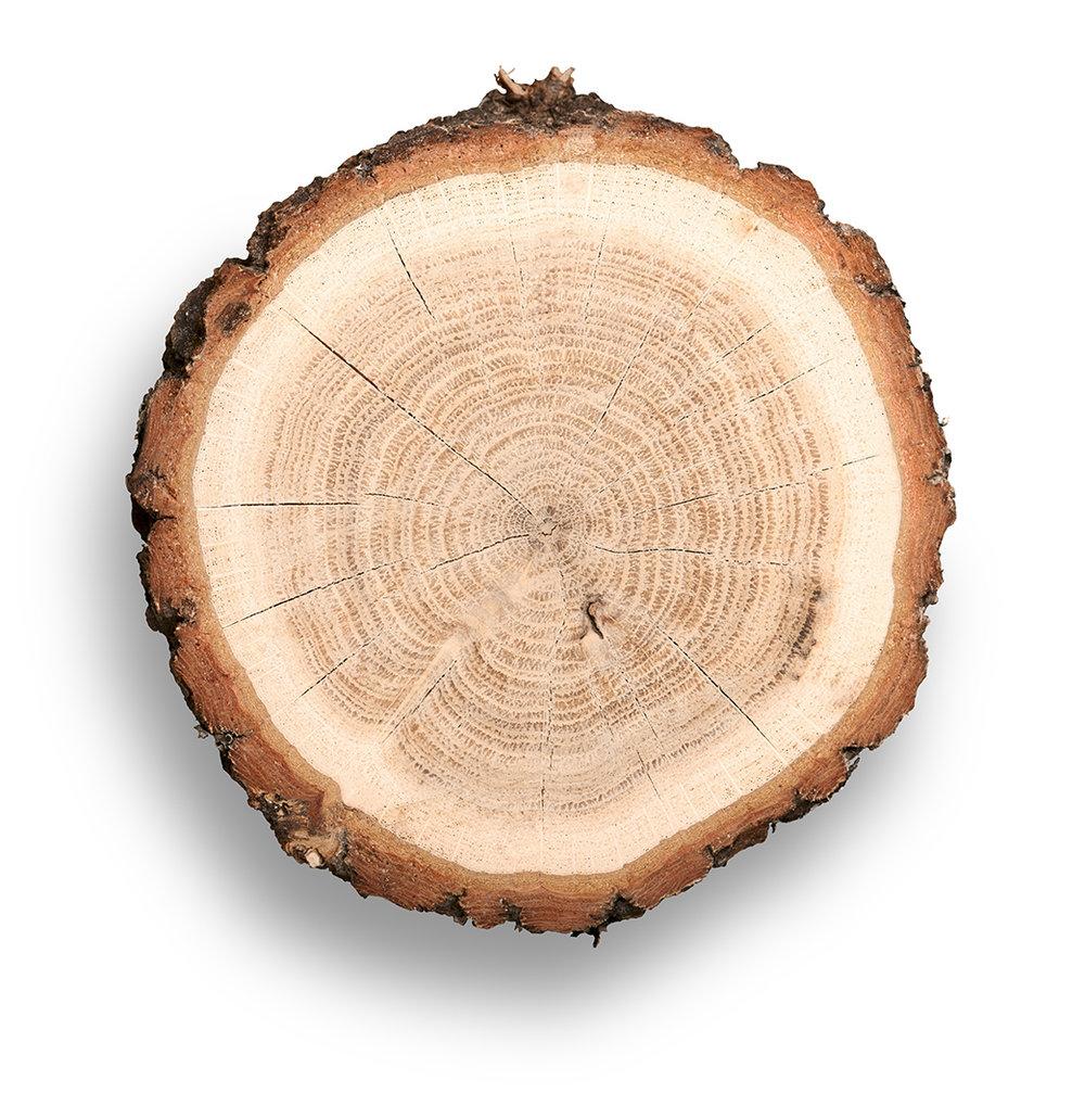 Wood_Cut.jpg